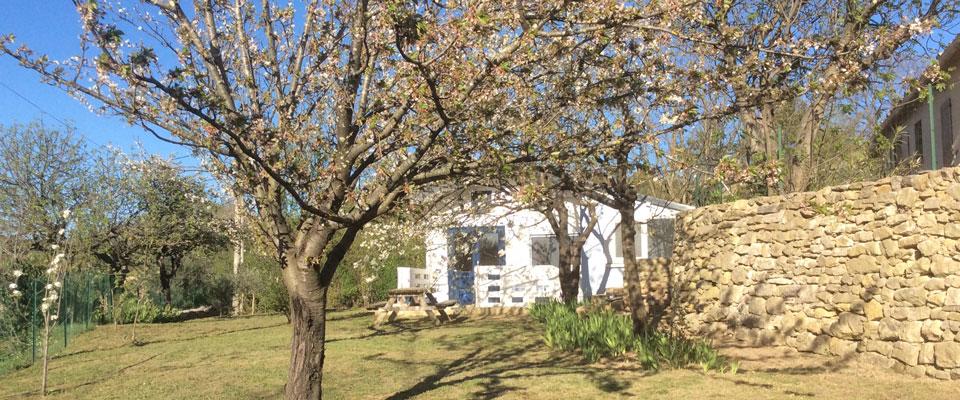 Tiny house in het voorjaar verscholen tussen de bloesem bomen