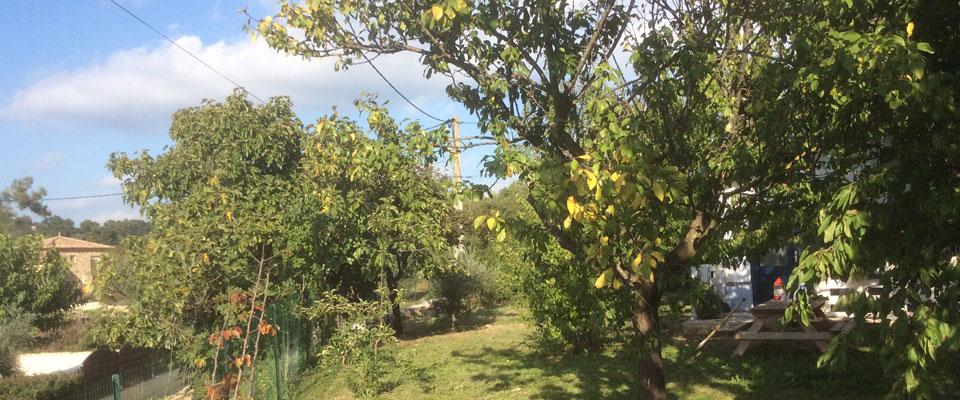 In de zomer ligt het tiny house verscholen onder de bladeren van de fruitbomen
